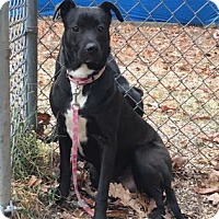 Adopt A Pet :: Carolina - Voorhees, NJ