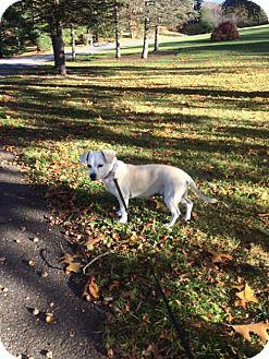 Dachshund/Chihuahua Mix Dog for adoption in Brooklyn, New York - Egypt
