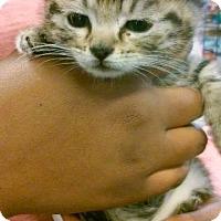 Adopt A Pet :: Selena - Raleigh, NC