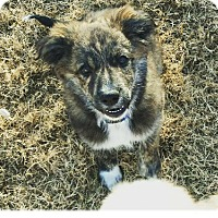 Adopt A Pet :: Harrison - Broken Arrow, OK