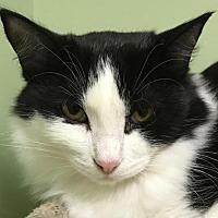 Adopt A Pet :: Piper - Auburn, CA