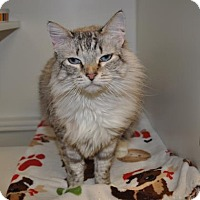 Adopt A Pet :: Miss Kitty - Suwanee, GA