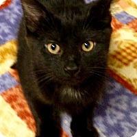Adopt A Pet :: Cosmo - River Edge, NJ