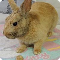 Adopt A Pet :: Chuck - Williston, FL