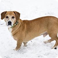 Adopt A Pet :: Hart - East Randolph, VT
