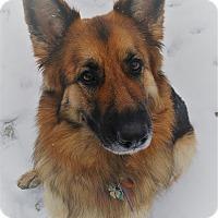 Adopt A Pet :: Jade - Woodinville, WA