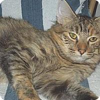 Adopt A Pet :: Foxy Lady - Makawao, HI