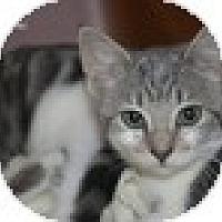 Adopt A Pet :: Grace - Vancouver, BC
