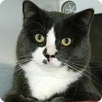 Adopt A Pet :: Smokey - Cheyenne, WY