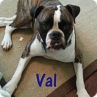 Adopt A Pet :: Val - St. Robert, MO