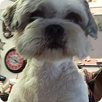 Adopt A Pet :: MacArthur - Phoenix, AZ