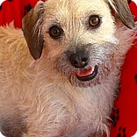 Adopt A Pet :: Dexter - san diego, CA
