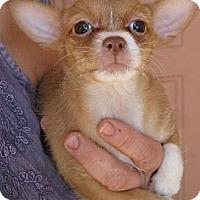 Adopt A Pet :: Florence - Phoenix, AZ