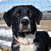 Adopt A Pet :: Fischer - Cheyenne, WY