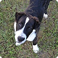 Adopt A Pet :: Tucker - Palmetto, FL