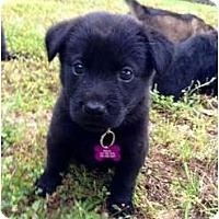 Adopt A Pet :: Fergie - Richmond, VA