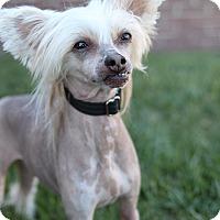 Adopt A Pet :: Ty - Bridgeton, MO