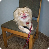 Adopt A Pet :: Ally - Chantilly, VA