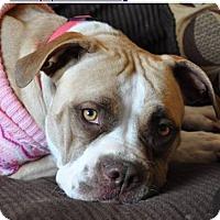 Adopt A Pet :: Annie - Evergreen Park, IL