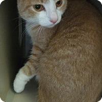 Adopt A Pet :: Peaches - Hamburg, NY