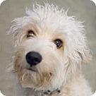 Adopt A Pet :: Bentz