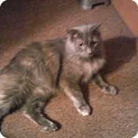 Adopt A Pet :: Lola - Columbus, OH