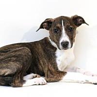 Adopt A Pet :: Sylvie - Bloomington, MN