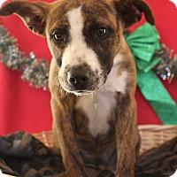 Adopt A Pet :: Rock - Waldorf, MD