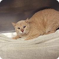 Adopt A Pet :: Mort - Shelby, MI
