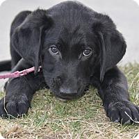 Adopt A Pet :: Finn - Meridian, ID