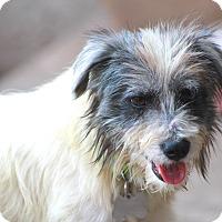 Adopt A Pet :: Andover - Woonsocket, RI