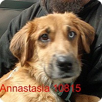 Adopt A Pet :: Annastasia - baltimore, MD