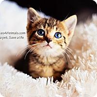 Adopt A Pet :: Giles - Xenia, OH