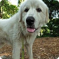 Adopt A Pet :: Sammy - Savannah, GA
