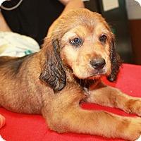 Adopt A Pet :: Emery - Sparta, NJ