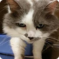 Adopt A Pet :: Annie Mae - Worcester, MA