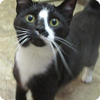 Adopt A Pet :: Kaya - Elkins, WV