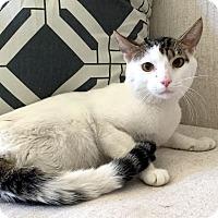 Adopt A Pet :: Brantley - Addison, IL