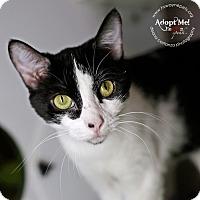 Adopt A Pet :: Beatrix - Lyons, NY
