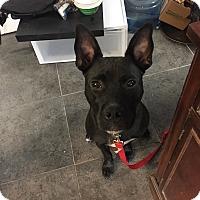 Adopt A Pet :: Sid - Las Vegas, NV