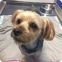Adopt A Pet :: Jay - Oakland Park, FL