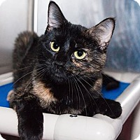 Adopt A Pet :: Vivian - Seville, OH