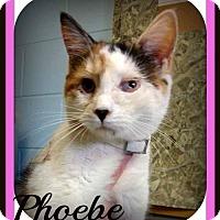 Adopt A Pet :: Phoebe: Fostered - Rustburg, VA
