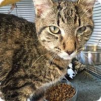 Adopt A Pet :: Tim - Hanna City, IL