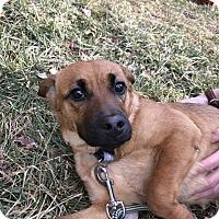 Adopt A Pet :: Tierra - Sparta, NJ