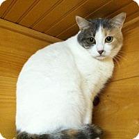 Adopt A Pet :: Panini - Waxhaw, NC