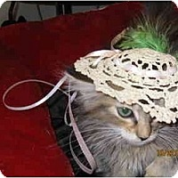 Adopt A Pet :: Sandy - Catasauqua, PA
