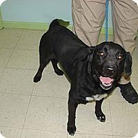 Adopt A Pet :: Jax - Providence, RI