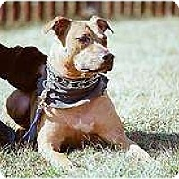 Adopt A Pet :: Leo - Vernon Hills, IL