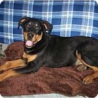 Adopt A Pet :: Big Boy - Antioch, IL